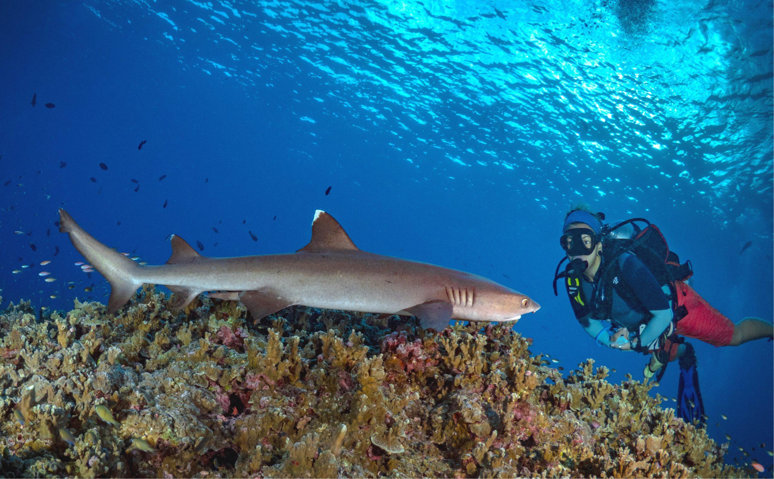 サメはダイバーを襲いません